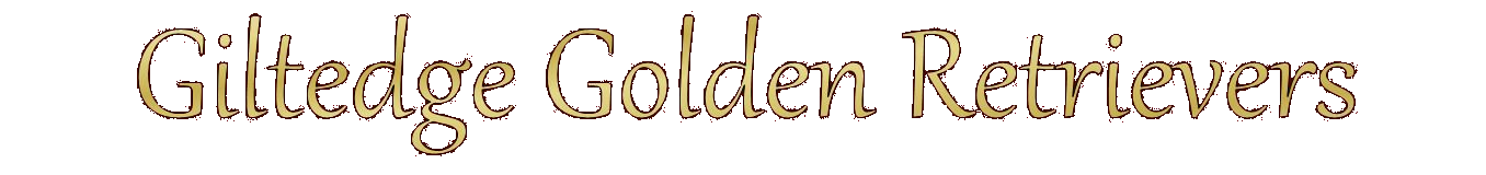 Giltedge Golden Retrievers